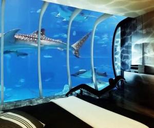 amazing, aquarium, and fishes image