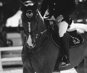 animal, blackwhite, and equestrian image