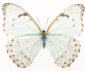 butterfly, animal, and white image