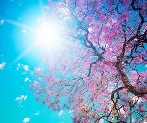 pink, spring, and tree image