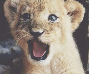 adorable, Hot, and lion image
