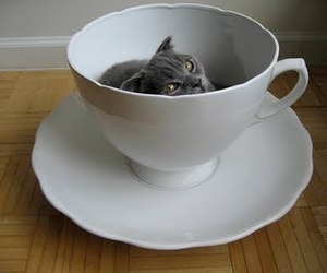 cat, cup, and tea cup image
