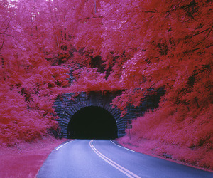 pink, tree, and road image