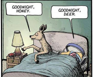 honey, funny, and deer image