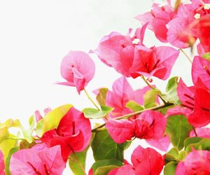 pink, spring, and fowers image