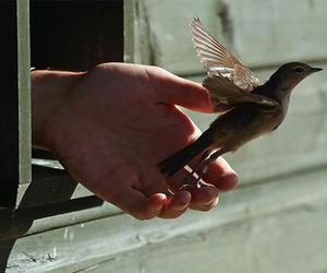 bird, hand, and animal image