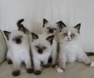 animal, cat, and pale image
