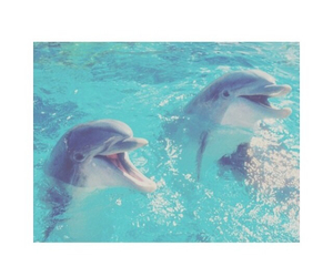 blue, dolphin, and grunge image