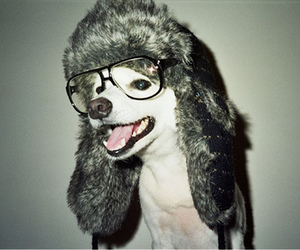 dog, glasses, and hat image