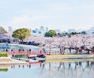 japan, cherry blossom, and city image