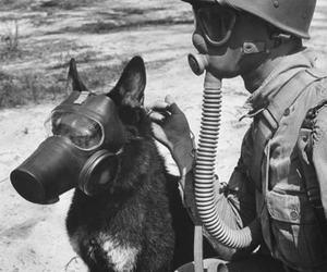 dog, black and white, and gas mask image
