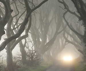 fog, tree, and forest image