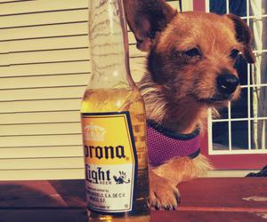 corona, summer, and dog image