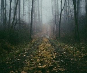 autumn, forest, and loneliness image