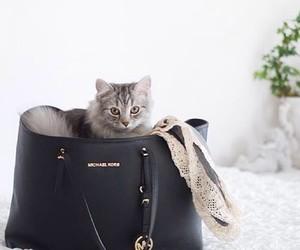 bag, cat, and Michael Kors image