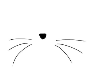 cat, overlay, and whiskers image