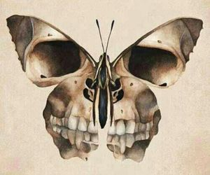 butterfly, skull, and art image