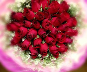 flower, red, and love beauty image