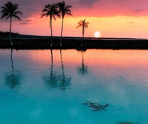 sunset, beach, and summer image