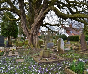 blooms, flowers, and graves image