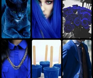 cat, dark blue, and fashion image