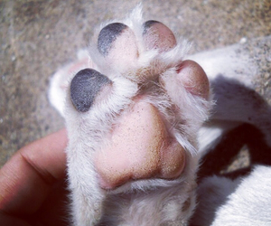dog, paw, and puppy image