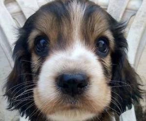 little, nose, and puppy image