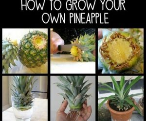 creation, pineapple, and diy image