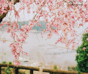 pink, flowers, and pretty image