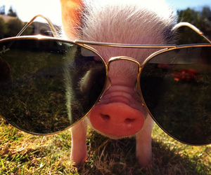 cute and pig image