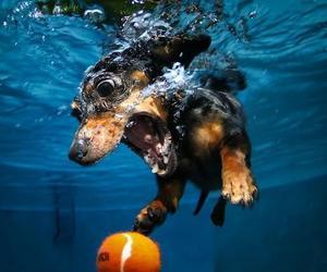 dog, water, and ball image