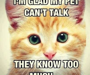 cats, pets, and secrets image