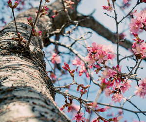 flowers, tree, and blossom image