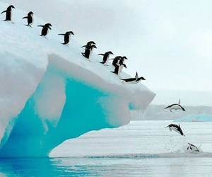penguin, ice, and animal image