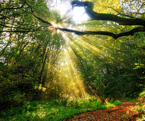 forest and sunlight image
