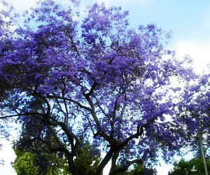 bright, flowers, and tree image