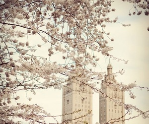 flowers, new york, and spring image