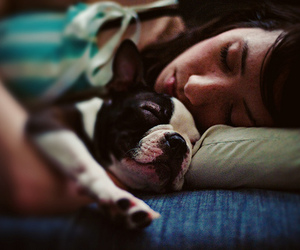 baby, boston terrier, and couch image