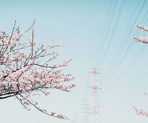 cherry blossom, pink, and sky image