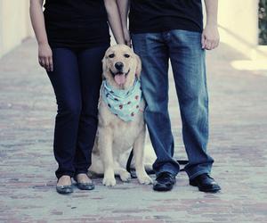dog, family, and golden retriever image
