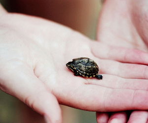 turtle, vintage, and animal image
