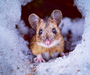 hamster, snow, and cute hamster image