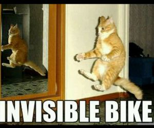 bike, cat, and funny image