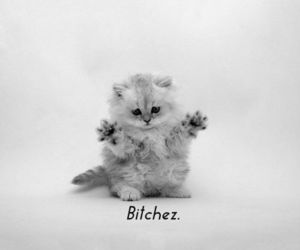 cat, cute, and bitch image
