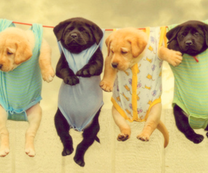 cute and dogs image
