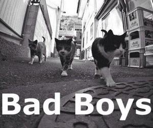 bad boys, cats, and cute image