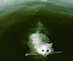 cat, water, and white image