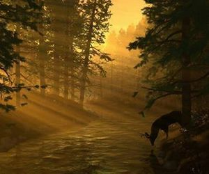 deer and forest image