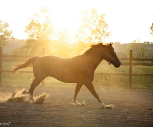 horse, beauty, and sunset image