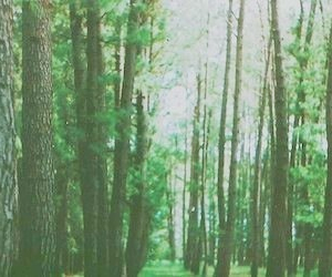 header, tree, and twitter image